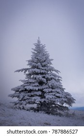 A lone Frasier fir tree stands on top of Roan Mountain along the Appalachian trail in the winter. How many hikers with so many stories passed by this tree?
