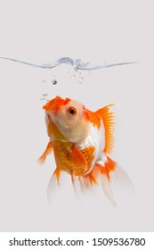 Lone Goldfish in an Aquarium With Bubbles Rising From His Mouth