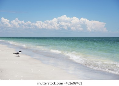 Lone Gull on the Sanibel Island Beach