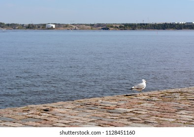 Lone gull stands on paved quay on the island of Suomenlinna, Finland
