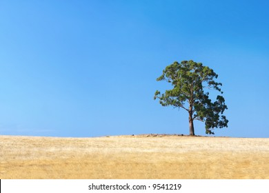 Lone gum tree in a parched Australian field, with brilliant blue sky.