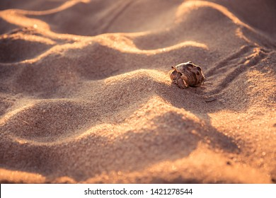 Lone hermit crab crawling across beach sand dunes towards shelter concept way forward