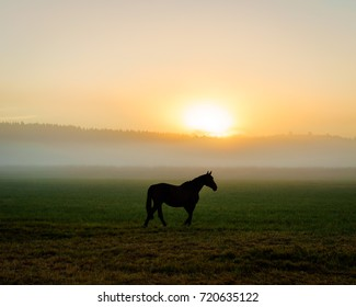 A lone horse
