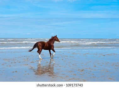 Lone Horse on the North Sea Coast in Zeeland, Netherlands