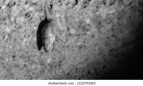 A lone land snail sliding on a pebbled wall at night, in black and white