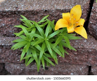 A lone lily grows between landscape blocks, creating an interesting contrast of textures.