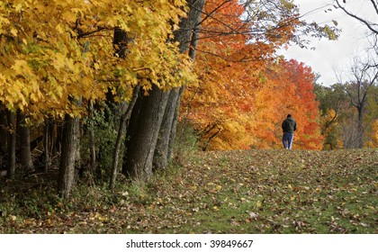 A lone man walks under the Fall color of a wooded park.