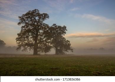 Alleineiche auf leeren Feldern bei Sonnenaufgang