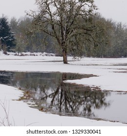 A lone oak stands in a snow covered field with it's reflection in water.