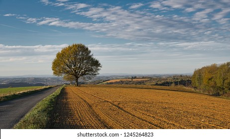 Lone oak tree in and autumn agricultural landscape