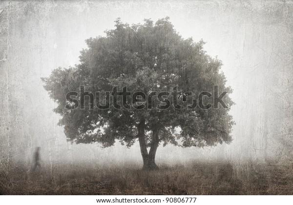 Lone oak tree in the fog