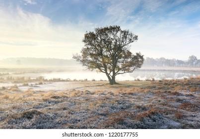 lone oak tree in mist by lake in autumn frosty morning