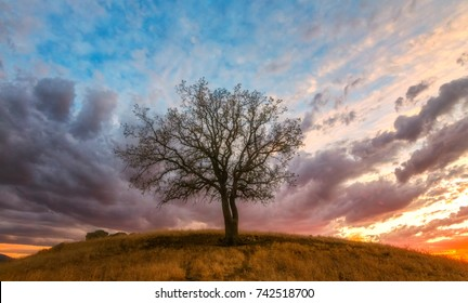 Lone oak tree sits on top of grassy hill at sunset with beautiful clouds and blue sky above.