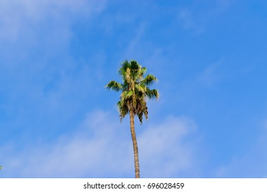Lone palm tree on summer day with room for copy text