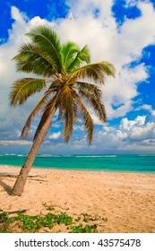 Lone Palm tree on a white sandy beach facing the Caribbean Sea