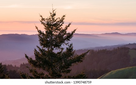 Lone pine tree in foreground with orange and purple sunset. View from Mt. Tamalpais at sunset.