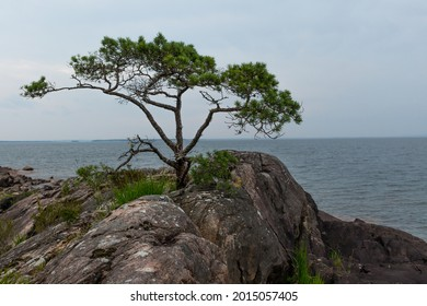 A lone pine tree growing on a cliff overlooking the lake.