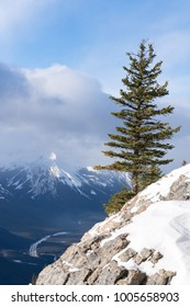 Lone pine tree on side of snowy rocky mountain, low valley and mountain range in distance. Winter scene