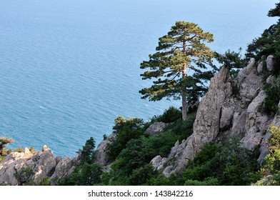 lone pine tree in the rocks on the background of blue sea
