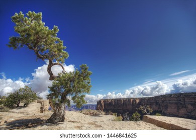 Lone pine tree at Top of rock in the Grand Canyon National Park