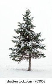 Lone Pinetree in a blizzard