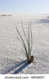 A lone plant in the White Sands National Monument
