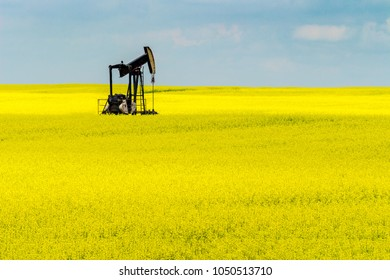 A lone pumpjack in the middle of a blooming canola field.