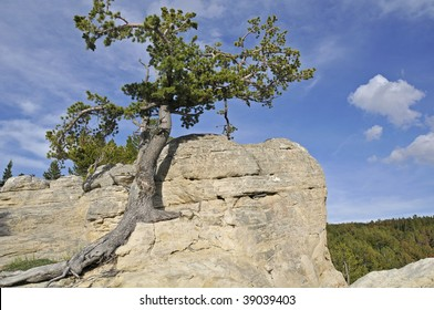 Lone resilient tree growing out of rocks high on hilltop