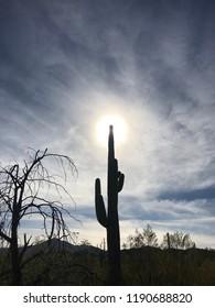 Lone saguaro cactus near Saguaro National Forest In Tuscon, Arizona.