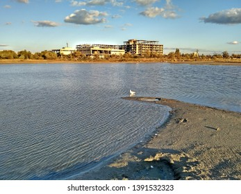 A lone seagull in the waters of the lake Moinak in the Crimea against the background of an abandoned building.