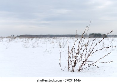 lone shrub on the field in winter
