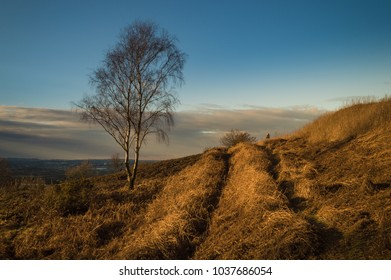 Lone Silver Birch tree in the late afternoon winter sun.