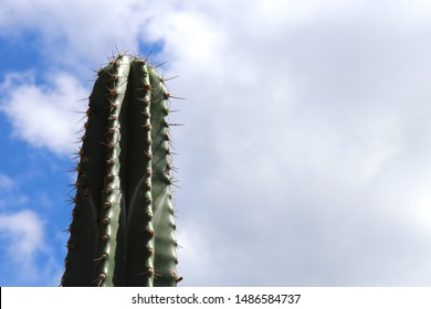 Lone spikey desert cactus against a beautiful blue sky with fluffy white clouds.