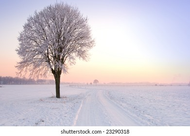 lone standing winter tree in a pale sunset landscape