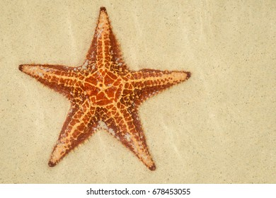 A lone starfish lying on the sand under clear shallow water at Starfish Point in Grand Cayman.