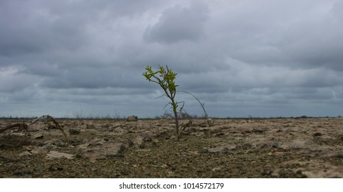 A lone, tenacious plant sprouts from the inhospitable earth of the salt flats in Camaguey province, Cuba.