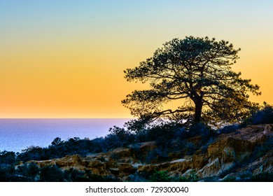 A lone Torrey pine tree stands against the colorful sky as the sun sets over La Jolla, California