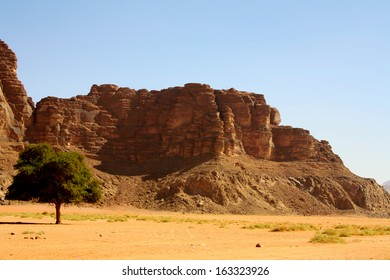 Lone Tree amid Desert Landscape with Rock Formations and Blue Sky, Wadi Rum, Jordan