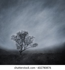 Lone tree in a bleak, misty landscape captured using long exposure, bokeh and other effects with some areas blurred to create a surreal and dreamlike effect.