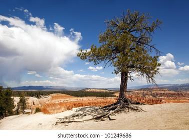 Lone tree at Bryce Canyon, Utah, USA, against dramatic sky.