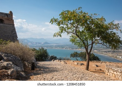Lone tree by the walls of old castle , with landscape filled with bay and hills on background