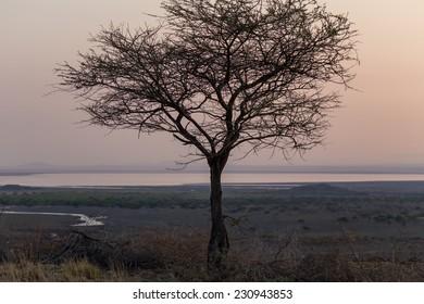 A lone tree at dawn, Natron lake, Tanzania