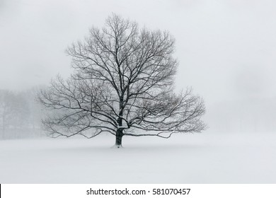A lone tree in a field covered with snow during a heavy snowfall.