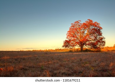 Lone tree in field at Six Mile Run State Park in Franklin Park, New Jersey.