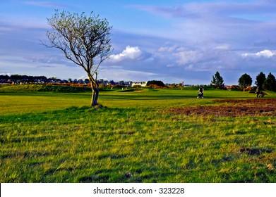 Lone tree and golfers, carnoustie, scotland