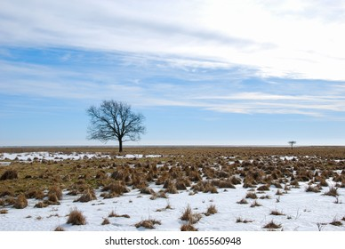 Lone tree in a great grassland with melting snow at the swedish island Oland in the Baltic Sea