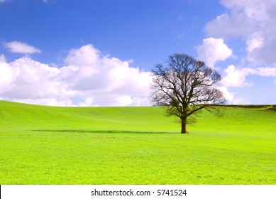 Lone tree in green meadow with blue sky and fluffy white clouds.