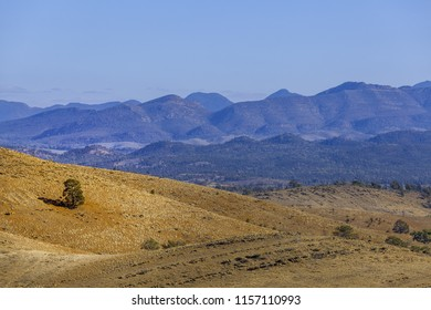 Lone tree growing on rolling hill in Flinders Ranges National Park in South Australia