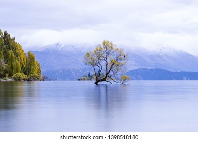 A lone tree has grown all alone on Lake Wanaka.