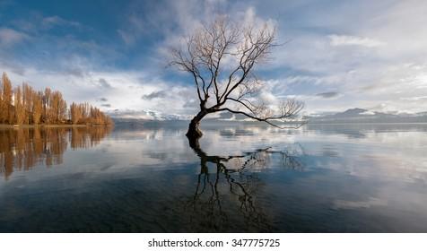 Lone tree, Lake Wanaka, New Zealand.